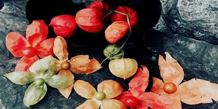 Ott 2016 Fiori d'autunno