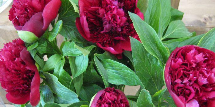 Apr 2017 Bouquet