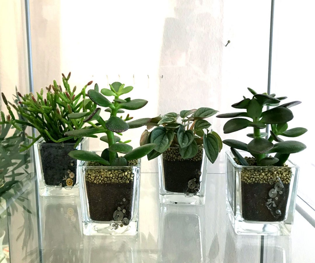 mini piante