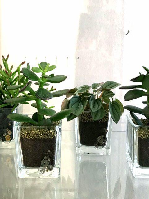 pianta2