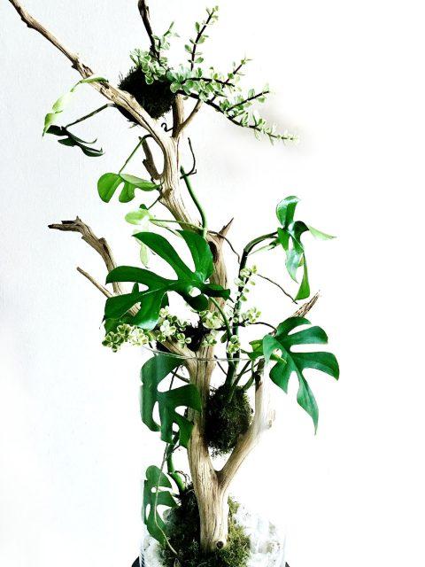 pianta1