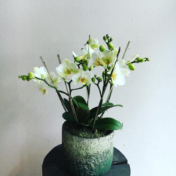 15 Mag 2020 Nuove piante